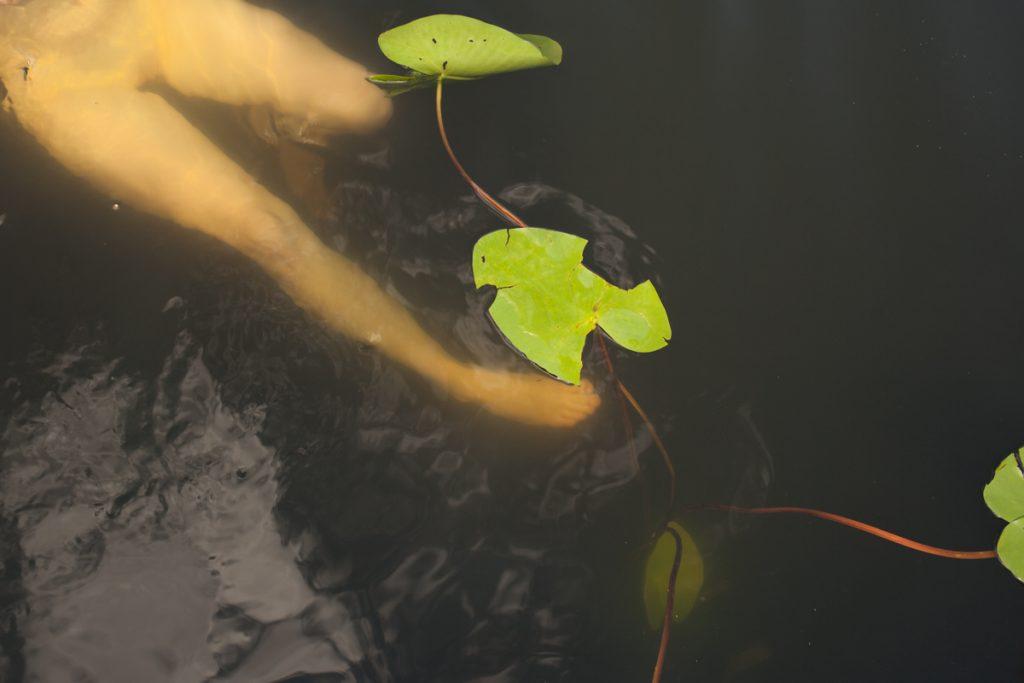 """lena loose"", lena maria loose fotografie photography swimming beauty orphelia seerose akt lake see dark water"