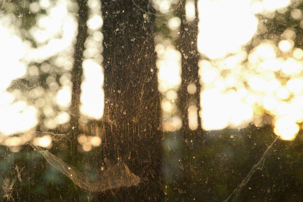 """lena loose"", lena maria loose fotografie photography spinnenweben abendlicht"